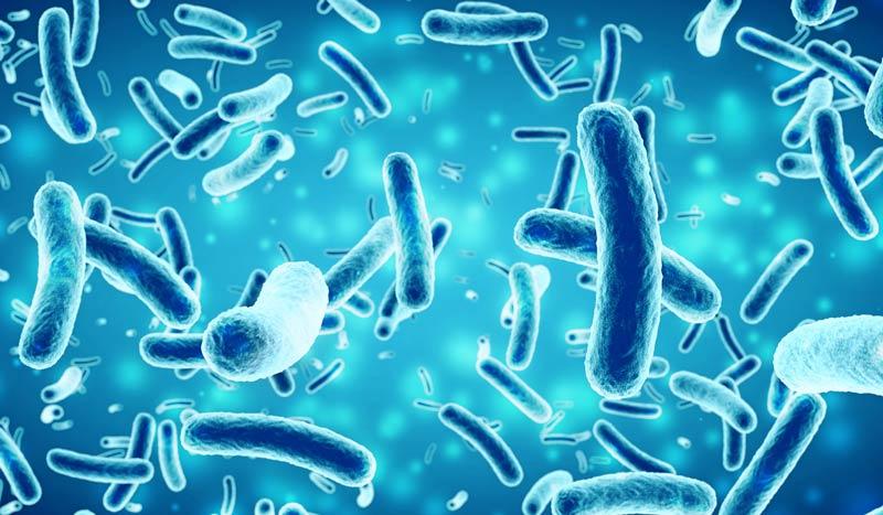 Antibacterial Components