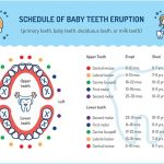 Tooth Eruption Chart for Baby and Adult Teeth