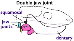 jaw joint image