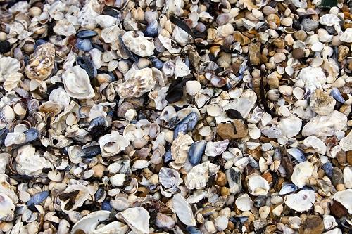 sea shells image