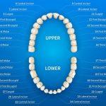 teeth numbers featured image